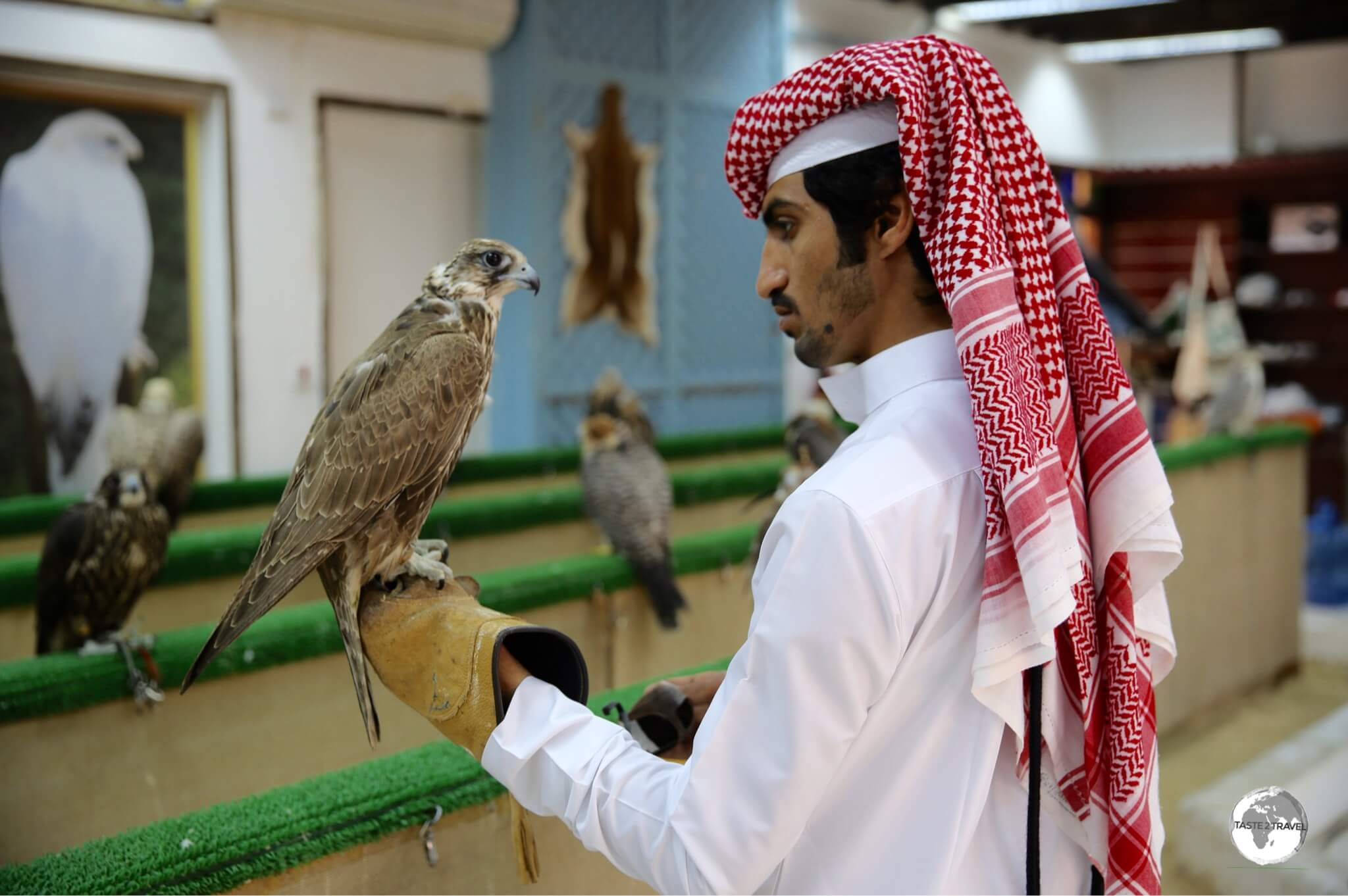 A customer inspects a Falcon prior to purchase. Falconry is serious business in Qatar!