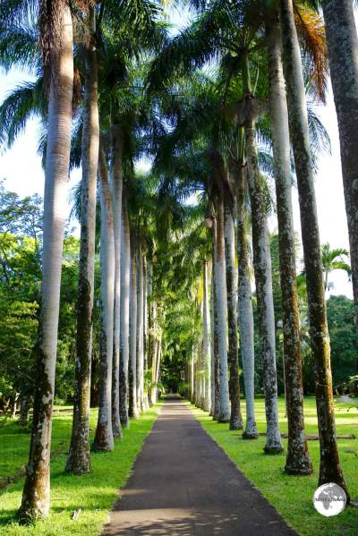 The botanical garden is home to no less than 85 different varieties of palm trees.