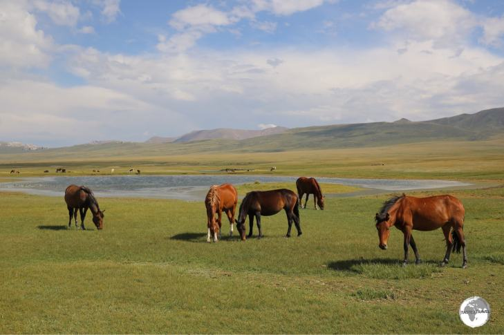 Horses grazing on the shore of lake Son-Kul.