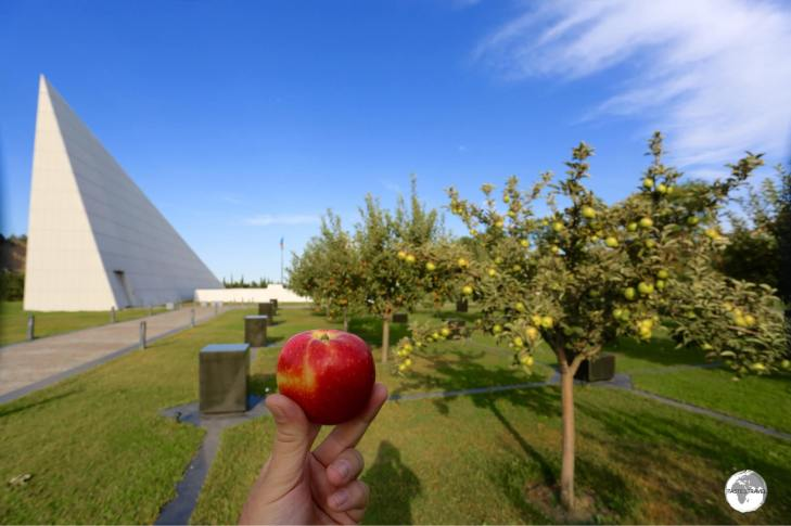 My apple which was carefully selected from the orchard by my friendly guide. It tasted so good!