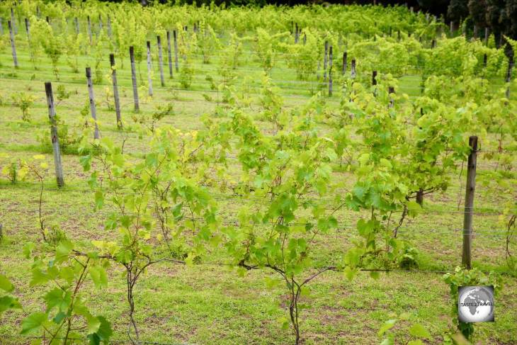 The small vineyard at Two Chimneys Wines on Norfolk Island.