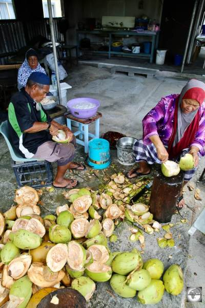 A family of Cocos Malays on Home Island harvesting coconut meat for an upcoming wedding feast.
