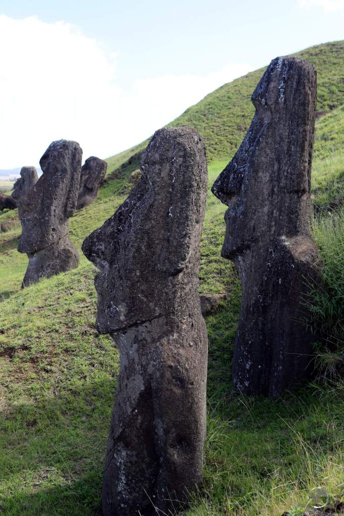 Many completed statues remain on the slopes of Rano Raraku volcano. Once the island became deforested, the statues, which were moved using logs, were unable to be transported.