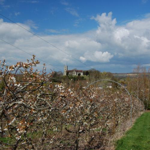 Godshill Orchards.jpeg