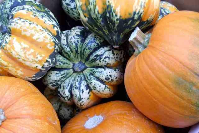 a variety of fresh pumpkins