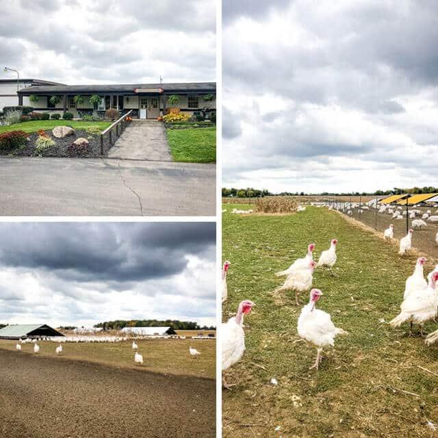 bowman landes turkey farm