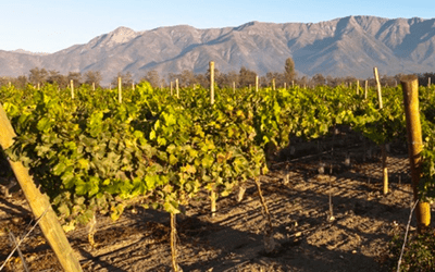 Taste Vacations Chile & Argentina Wine Tour