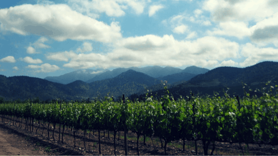 Chilean Wine Country