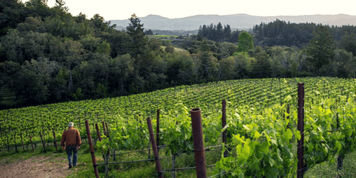 Davero Sonoma County Vineyard Walk