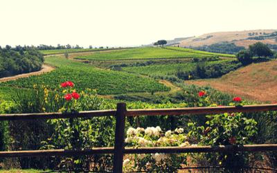 Tuscany Food & Wine Tour