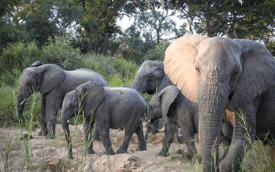 Elephant Family South Africa Safari