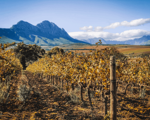 South Africa Winelands