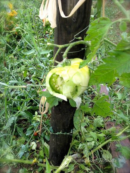Tasting Good Naturally : Légumes bios ou pas ? Telle est la question ! Je vous livre ici mon point de vue ainsi que quelques petites astuces pour faire votre propre choix !
