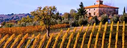 tuscany-vineyard