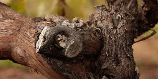 ringbolt-vines