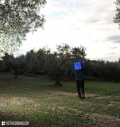 picking-olive-local-farmer_ND3_8587
