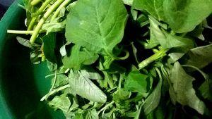 IMG_5501-300x169 Fenugreek leaves fry/Chowli bhaji/Siru keerai poriyal