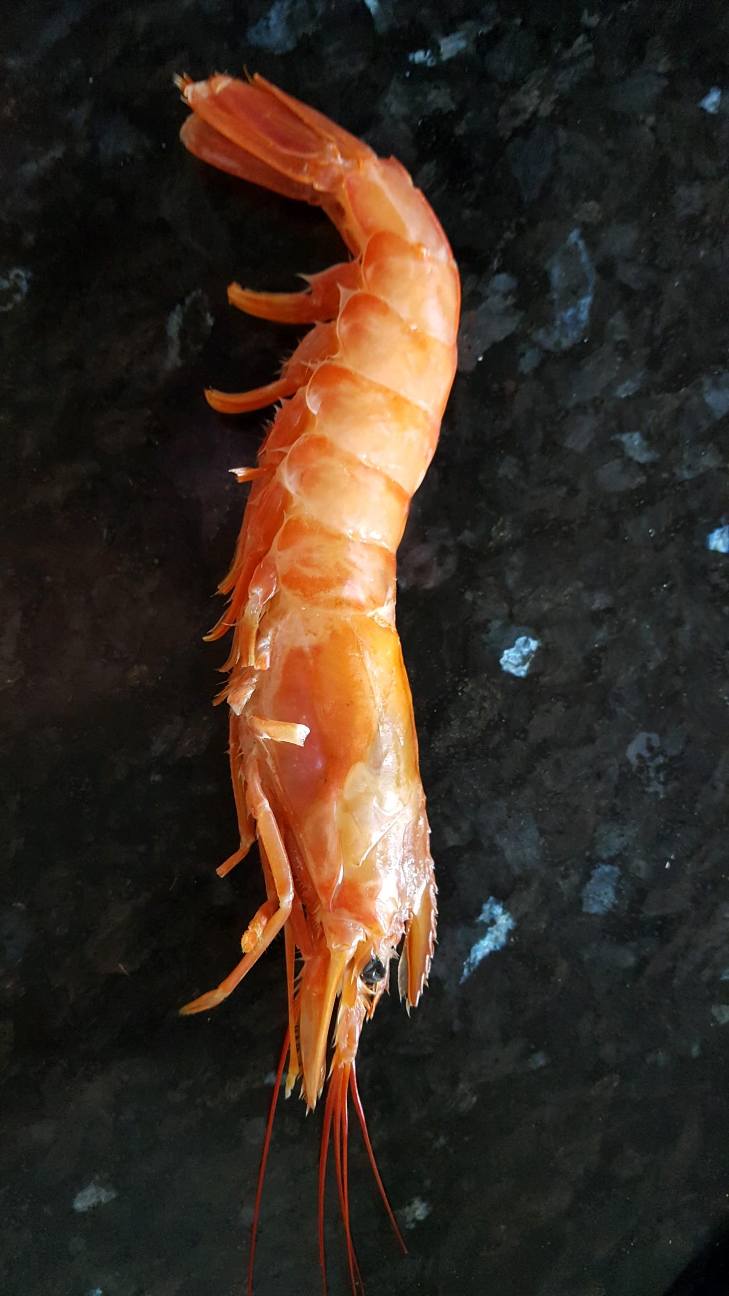 Ken's 4th of July New England Lobster Bake – Tasty Island