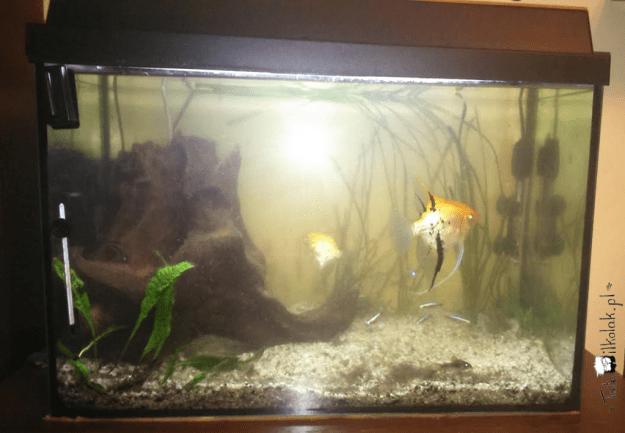 akwarium-przed