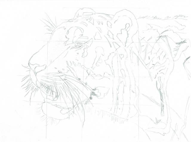 sketch of tiger