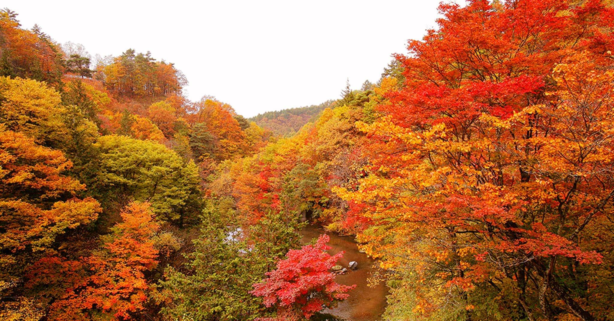 写真_山の紅葉1