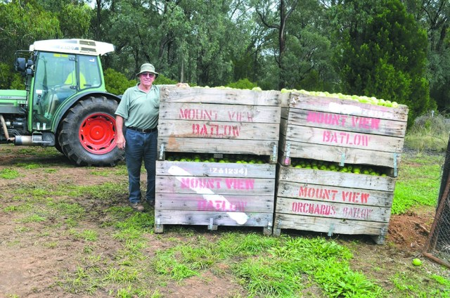 Chairman of the Batlow Fruit Co-op John Robson is confident that, although affected by the harsh weather conditions, this year's crop will be a success.