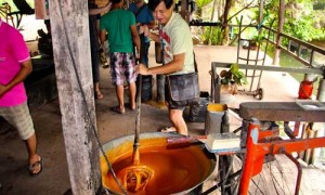 making-palm-sugar