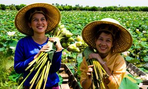 Lotus-Field,-Nakhon-Pathom