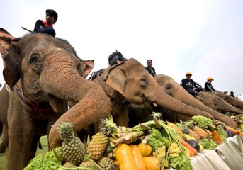 Prominent elephant polo tournament enjoys a successful 14th Year in Thailand