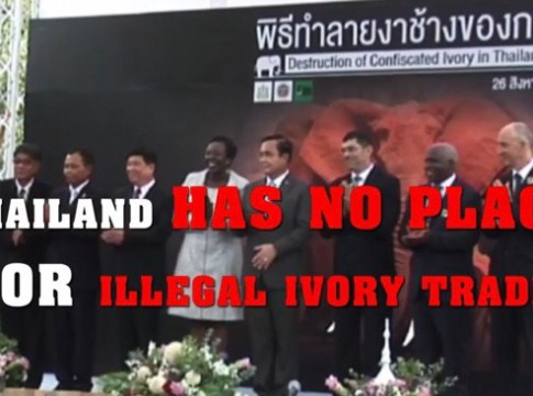 Thailand continuing efforts to end illegal ivory trade