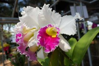 17th Rajamangala Orchid Festival