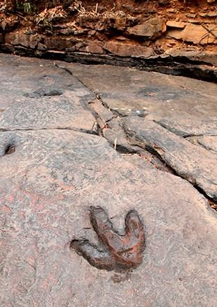 Dinosaur footprints in Phu Faek Forest Park, Kalasin