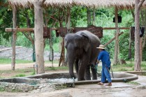 Thai wildlife conservation and animal care efforts are working