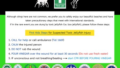 What to do in the case of a jellyfish sting