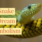 What Does It Mean To Dream About Snakes Attacking You