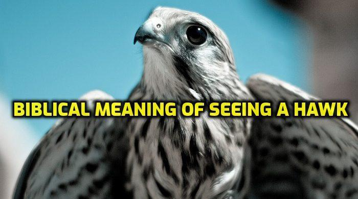 BIBLICAL MEANING OF SEEING A HAWK