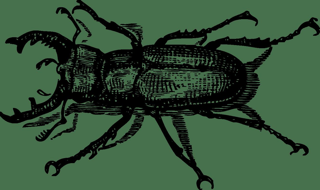 Beetle Tattoo Images Amp Designs