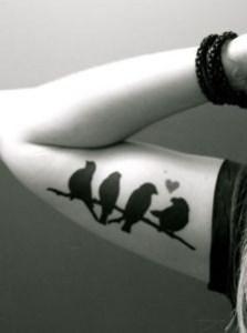 Aves sobre rama