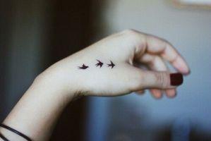 Aves en la mano