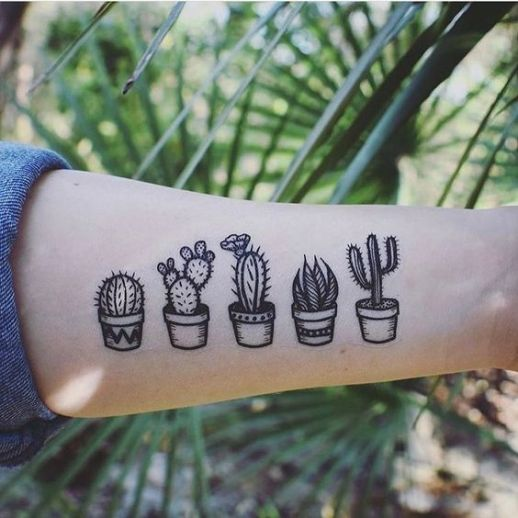 Cactus variados