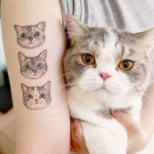 Gatitos de amor