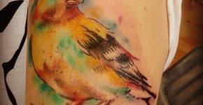Bird tattoo watercolors effect
