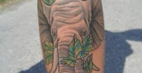 Retrato de elefante en la pierna