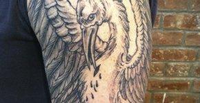 Tatuaje pelícano