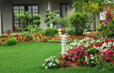 melhores flores para jardim
