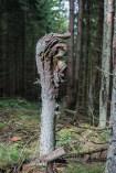 Waldschrate#7 by Michael Krämer