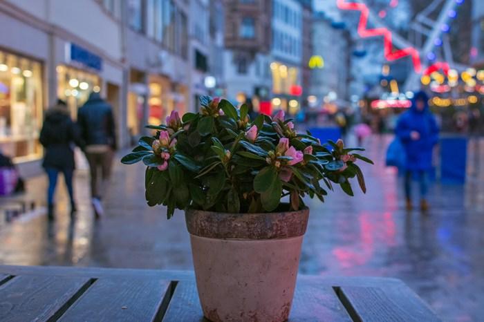 Tischblume #56 rainy season