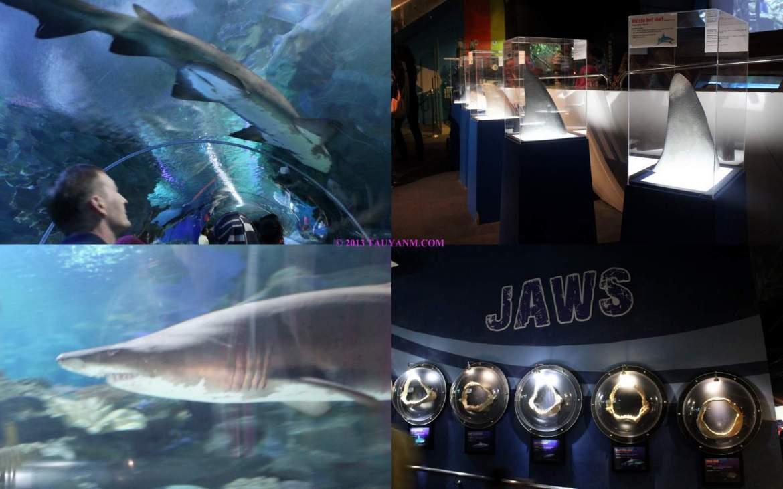 aquariatauyanm