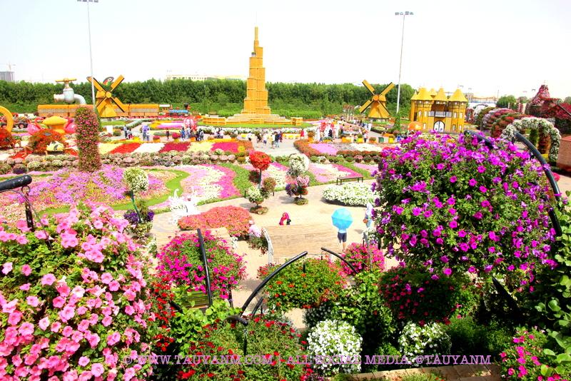 Dubai Miracle Garden - www.tauyanm.com
