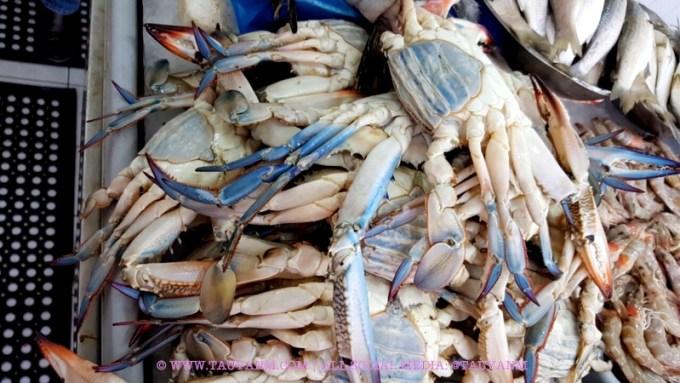 karama fish market dubai blogger tauyanm